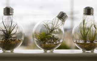 Люминесцентные лампы для аквариума